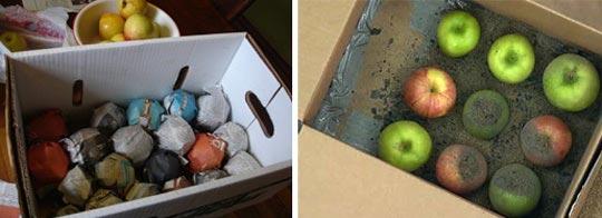 Условия хранения яблок в домашних условиях 325
