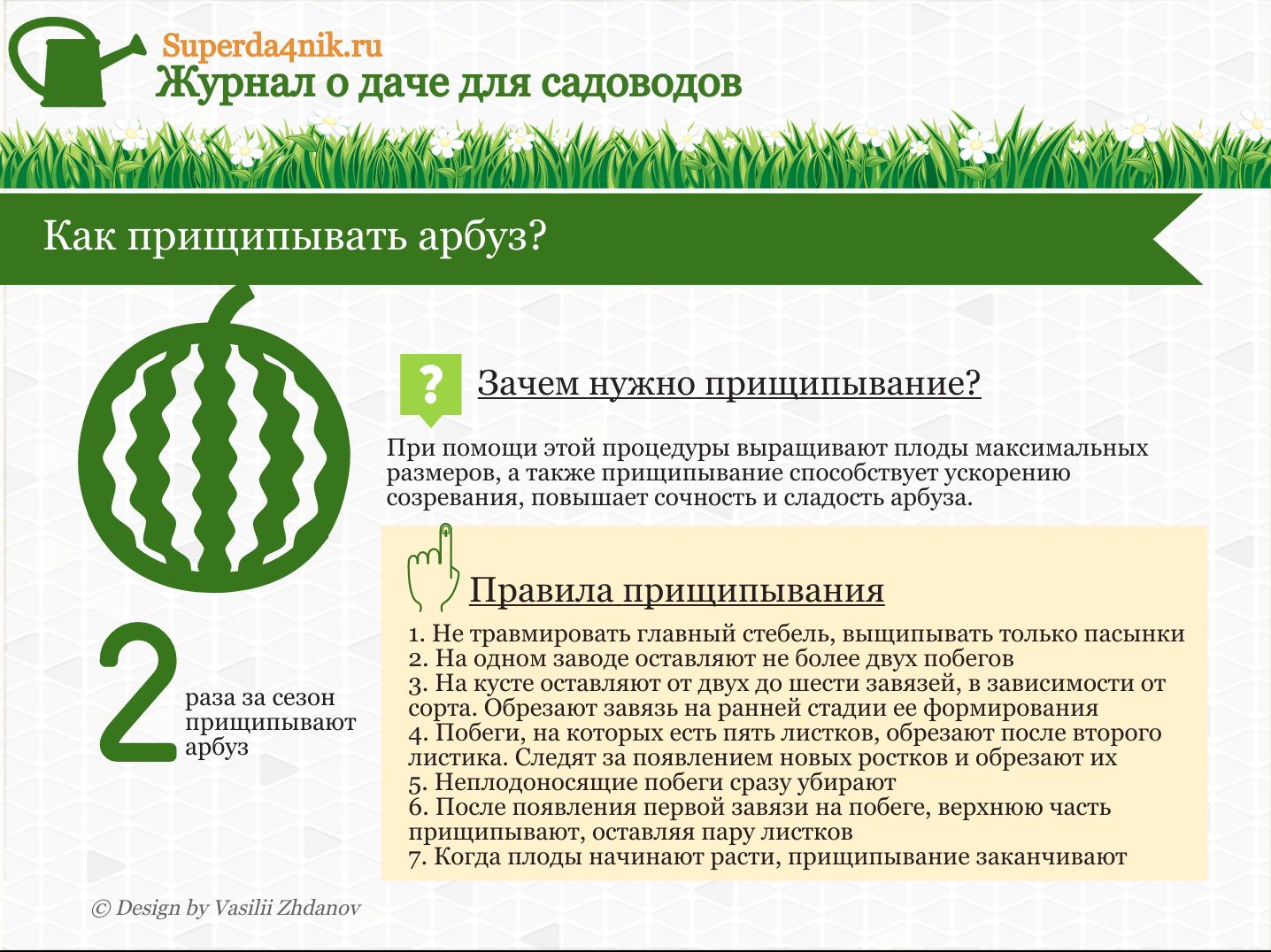 Выращивание арбузов в открытом грунте прищипывание 72