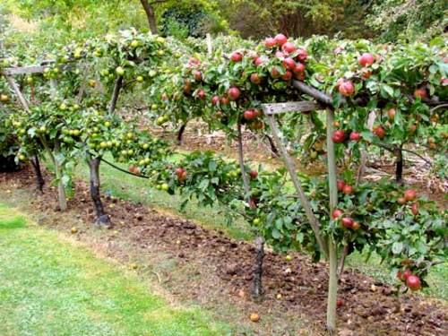 Плодовый сад своими руками фото