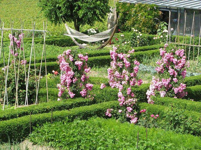 Существует множество вариантов опор для плетистых роз